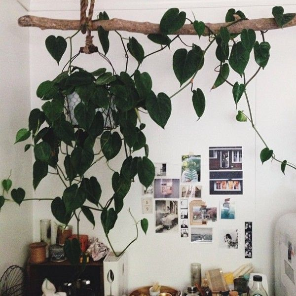 Decorating with indoor vine plants is increasingly popular as an option to freshen up interiors and we love this trend. It's a great way to make your home decor interesting for many reasons. Firstly, live plants add a very positive note to a space and there are so many creative things you can do with …