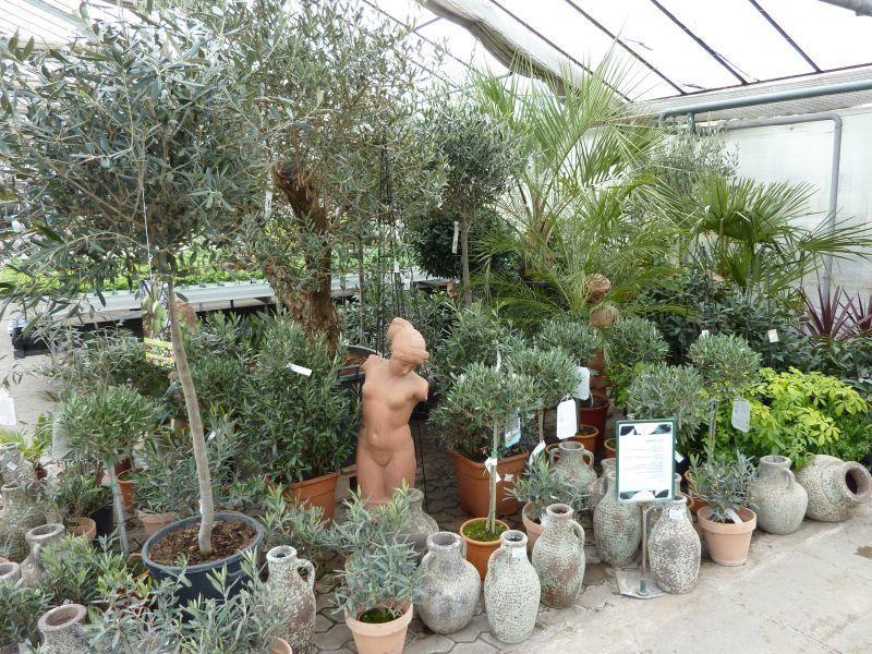 mediterrane pflanzen f r den garten garten mediterrane pflanzen mediterrane pflanzen. Black Bedroom Furniture Sets. Home Design Ideas