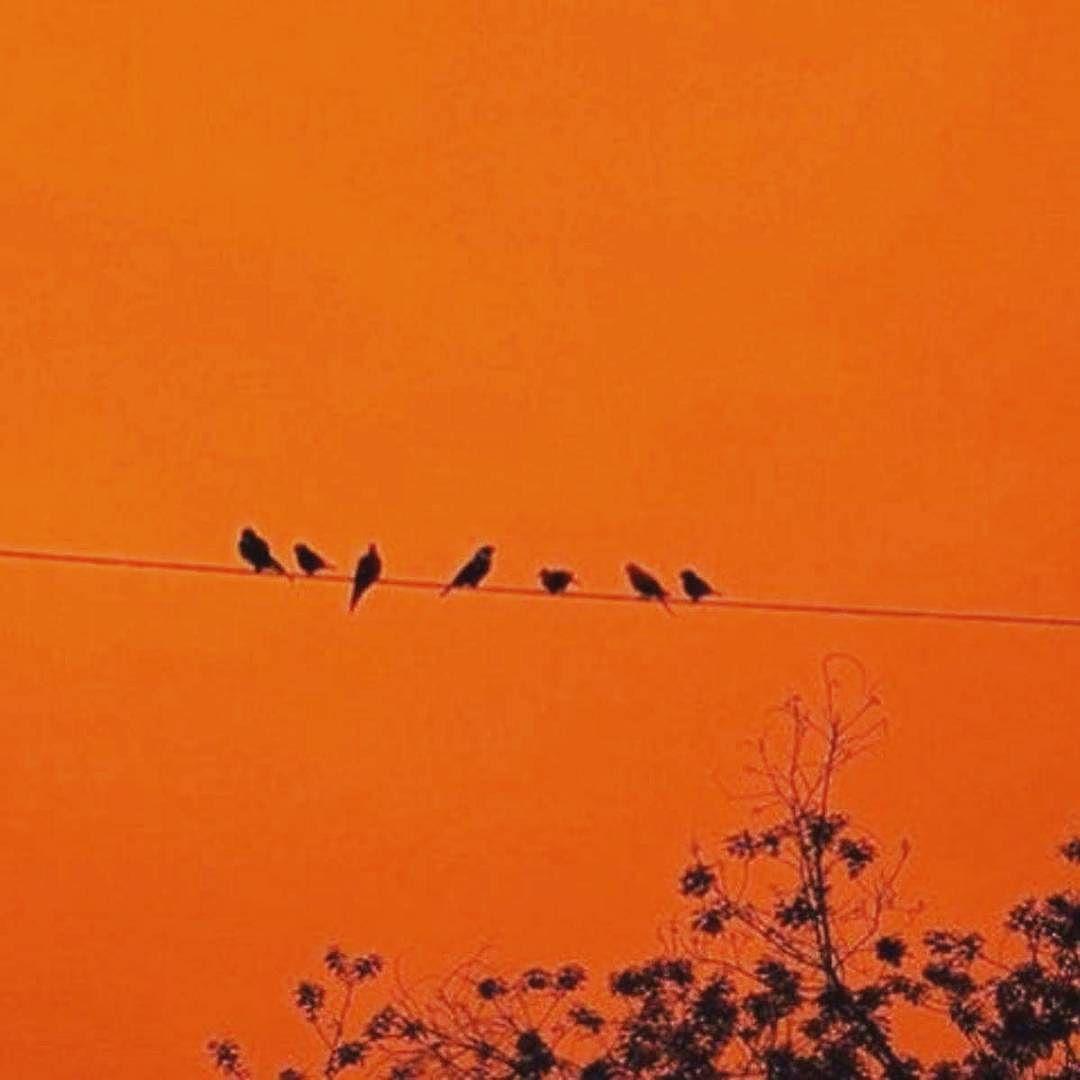 Оранжевые картинки тумблер