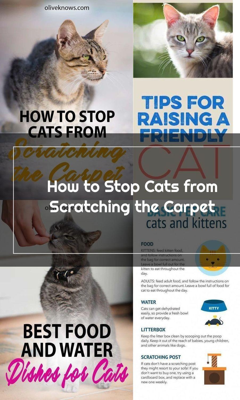 Cat Care Tips Panosundaki Pin