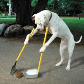 I D Get This Dog Dogs Pooping Funny Dog Pictures Dog Cleaning