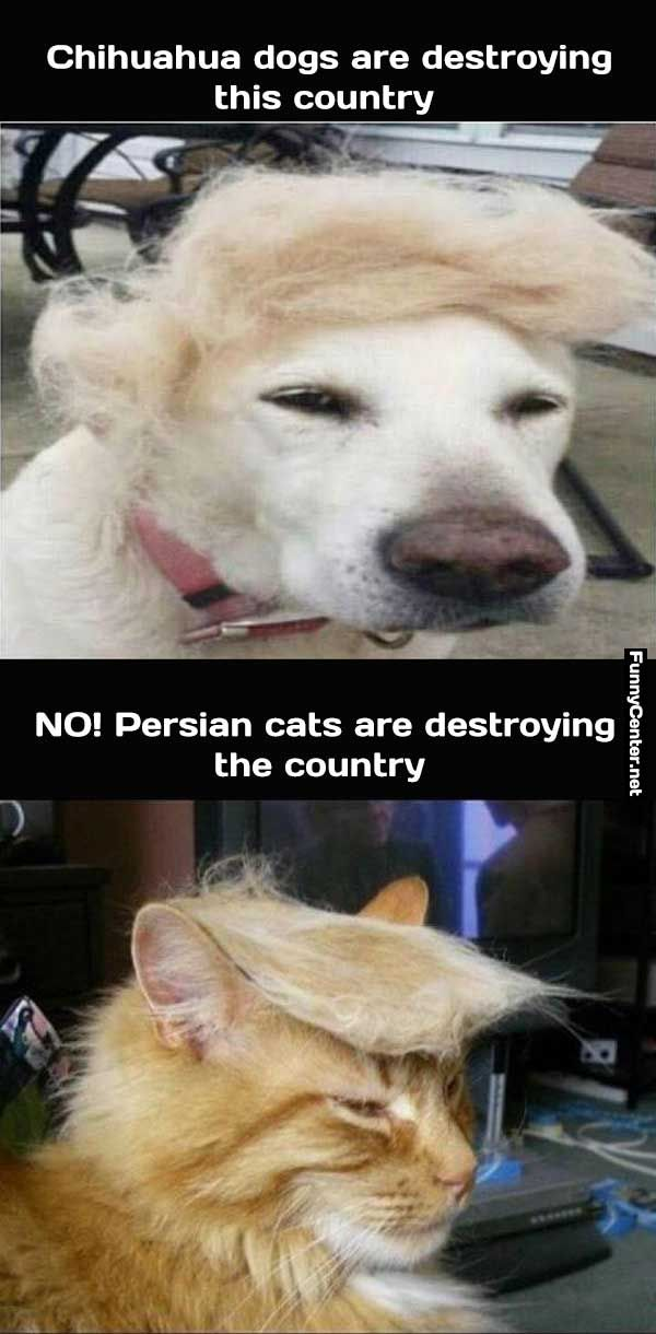 Pin On Lol Funny Pictures