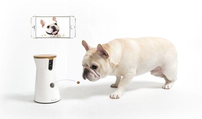 世界初 おやつが飛び出すドッグカメラ Furbo ショッピング Style プラススタイル Softbank ソフトバンク Iot プロダクト 犬 犬用品 アプリ Iphone