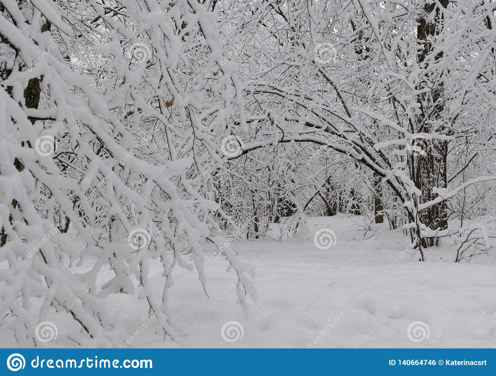 Wonderful Winter Forest Snow Arch Stock Photo Image Of Ground Background 140664746 Winter Forest Photo Snow