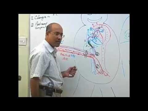 DR NAJEEB!!! Life saver, esp when it comes to neuroanatomy