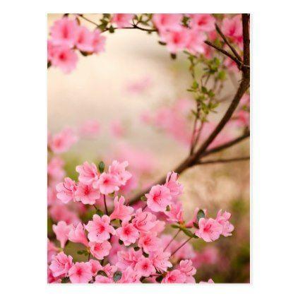Pink Azalea Flowers Postcard Postcard Post Card Postcards Unique Diy Cyo Customize Personalize Spring Flowers Wallpaper Azalea Flower Flower Wallpaper