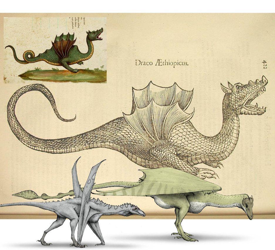 Dragons of Ulisse Aldrovandi by ~Hyrotrioskjan on deviantART