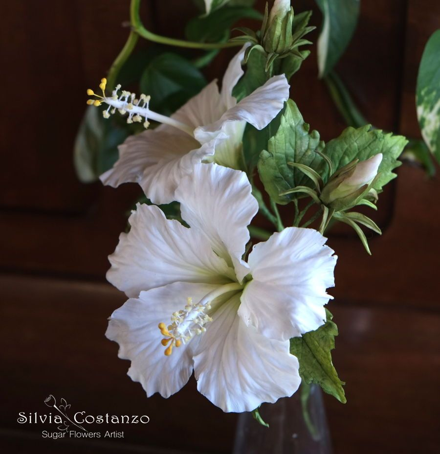 White hibiscus hibiscus is one of my favorite flowers i made it for white hibiscus hibiscus is one of my favorite flowers i made it for the wedding cake for my sister 3 izmirmasajfo