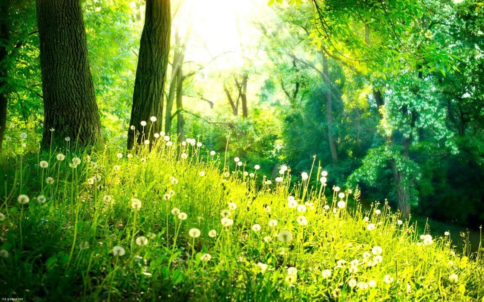 spring forest flowers wallpaper gzavanet reference