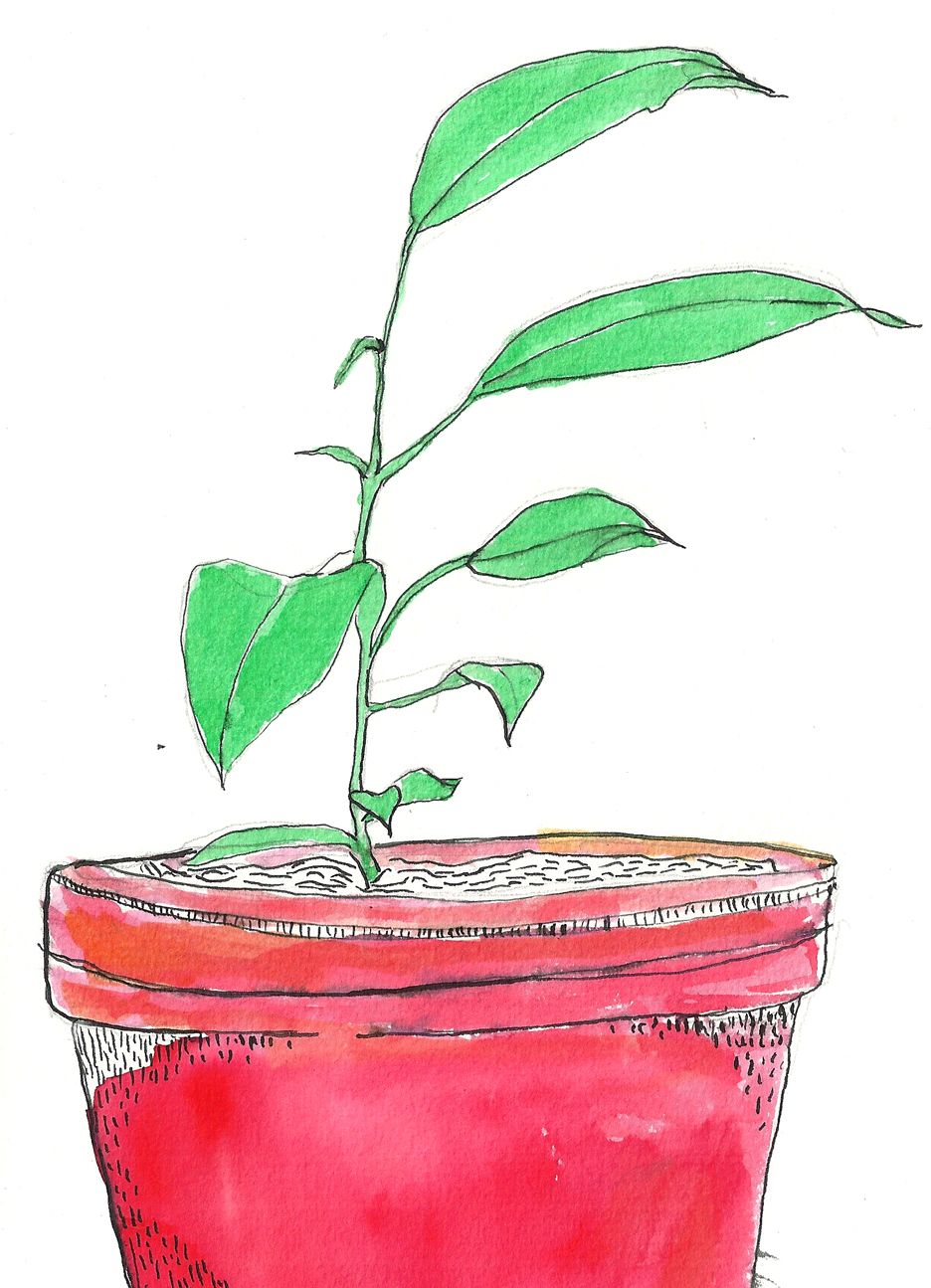 Garden Answers Plant Identification App Plant