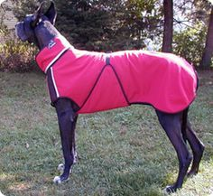 A Great Dane Coat With Perfect Fit Dog Coats Great Dane Dogs