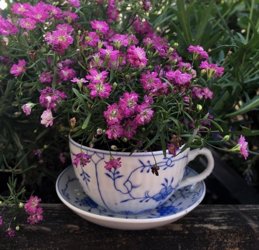 Teetassen Als Blumentopf Auf Dem Balkon Frag Mutti Topfblumen Teetasse Pflanzen