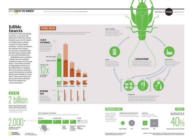 Edible Insects Infographic Google Search Edible Insects Eating Insects Bug Food