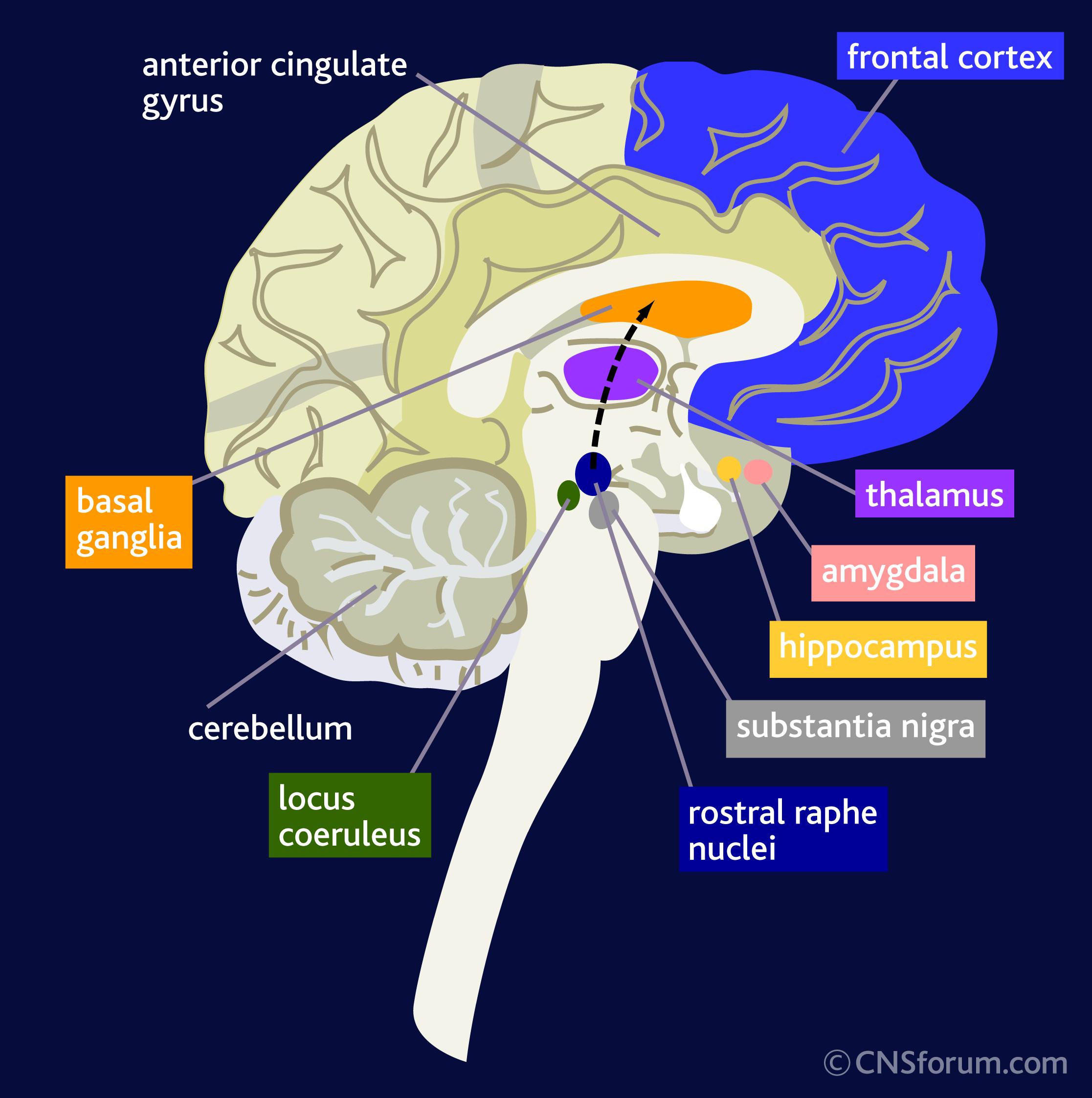 The Invigorated Mind