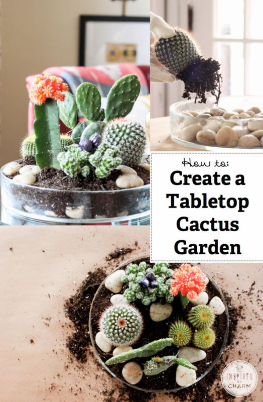 How To Make A Tabletop Cactus Garden