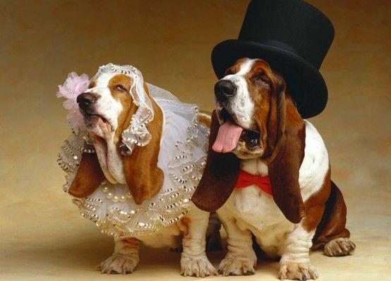 Resultado de imagen para basset hound dressed