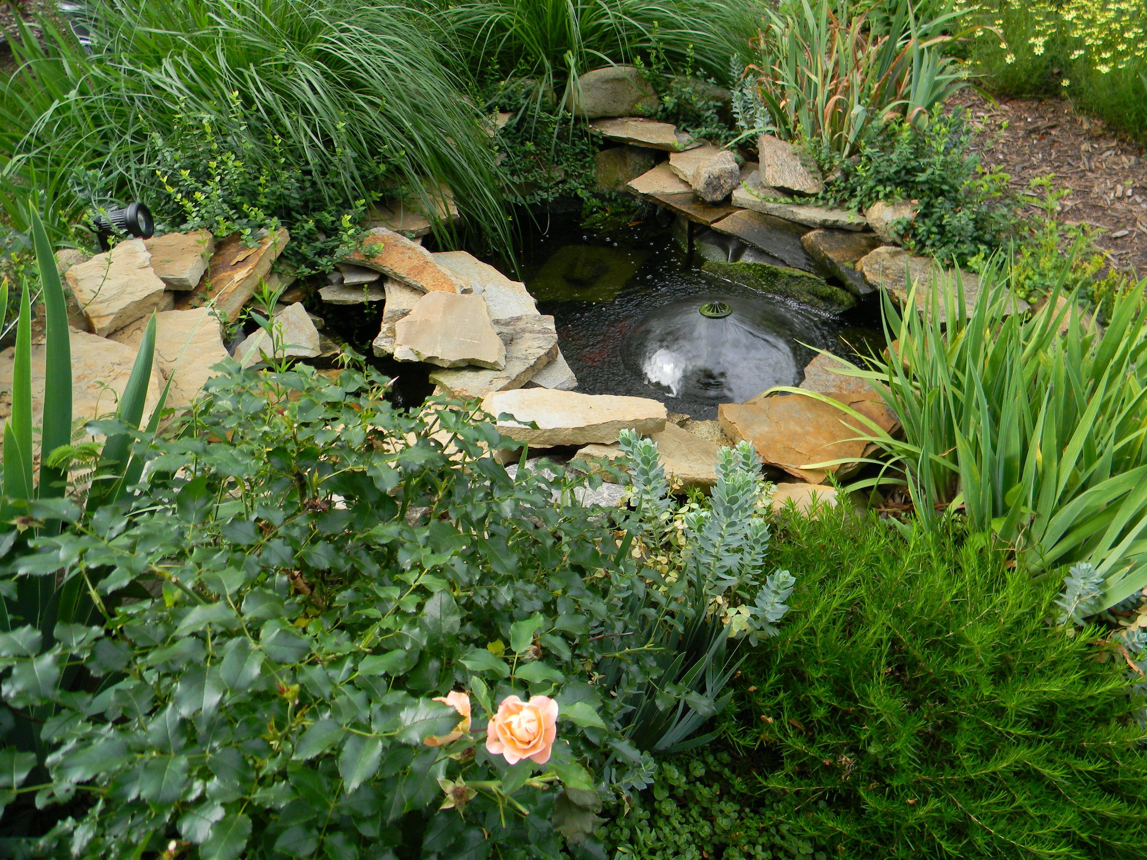 The Garden Diary | Outdoor living, Outdoor backyard ...
