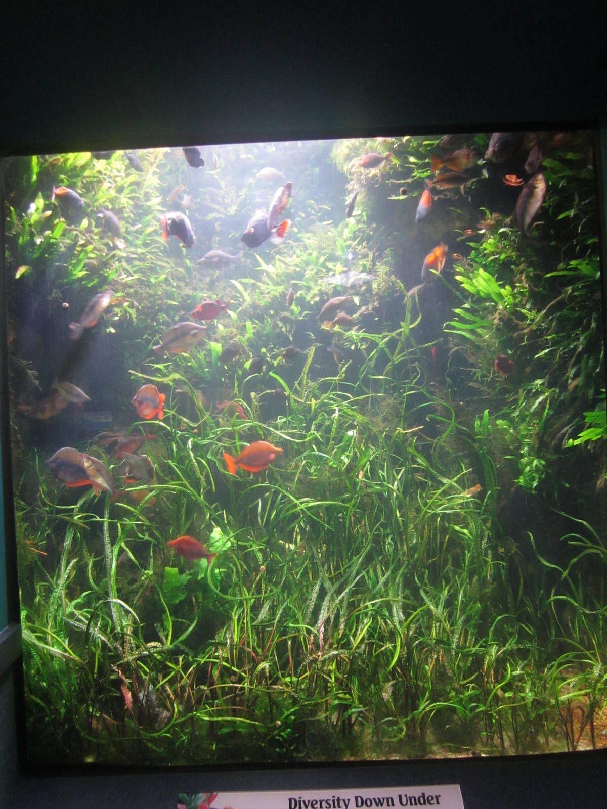 Tropical Fish World Rivers  Australia Tank