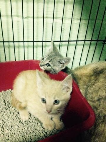 Pip Squeak Have Been Rescued The 431st And 432nd Cats Rescued