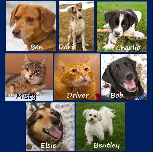 Our other adopted pets in May 2013