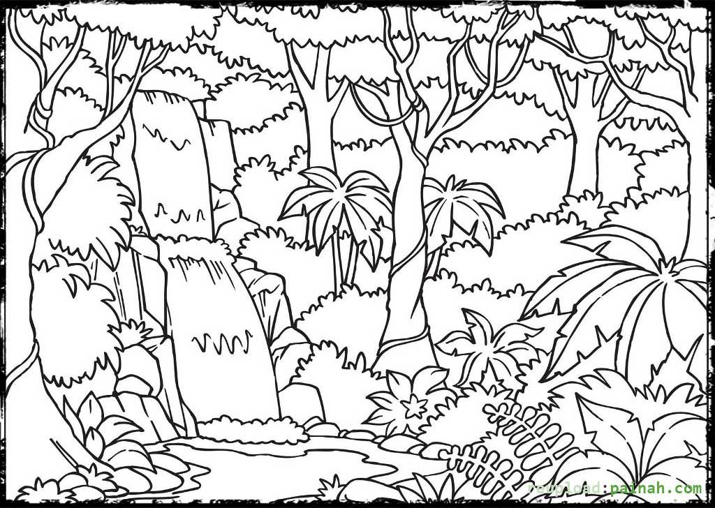Rainforest Enchanted forest coloring book, Forest