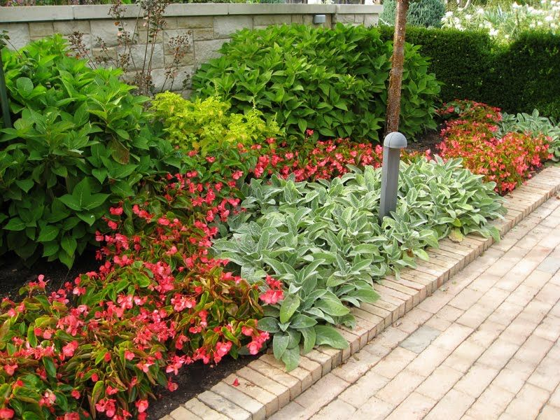 Recommend Some Good Plants For Landscaping Plants Landscaping Plants Cool Plants