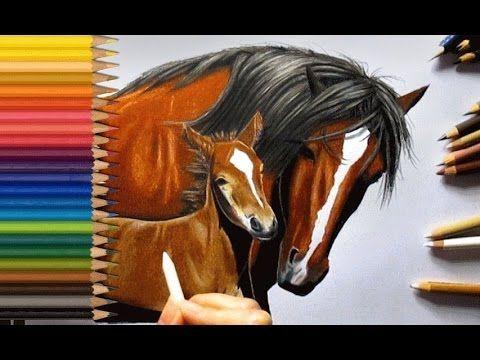 Horse Color Pencil Drawing Horse Drawings Horse Art Horse Drawing