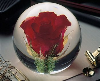 The Forever Rose Paperweight displays an actual rose to represent genuine beauty. Yes, that's right, an actual rose preserved in it's bloom! How cool is that?