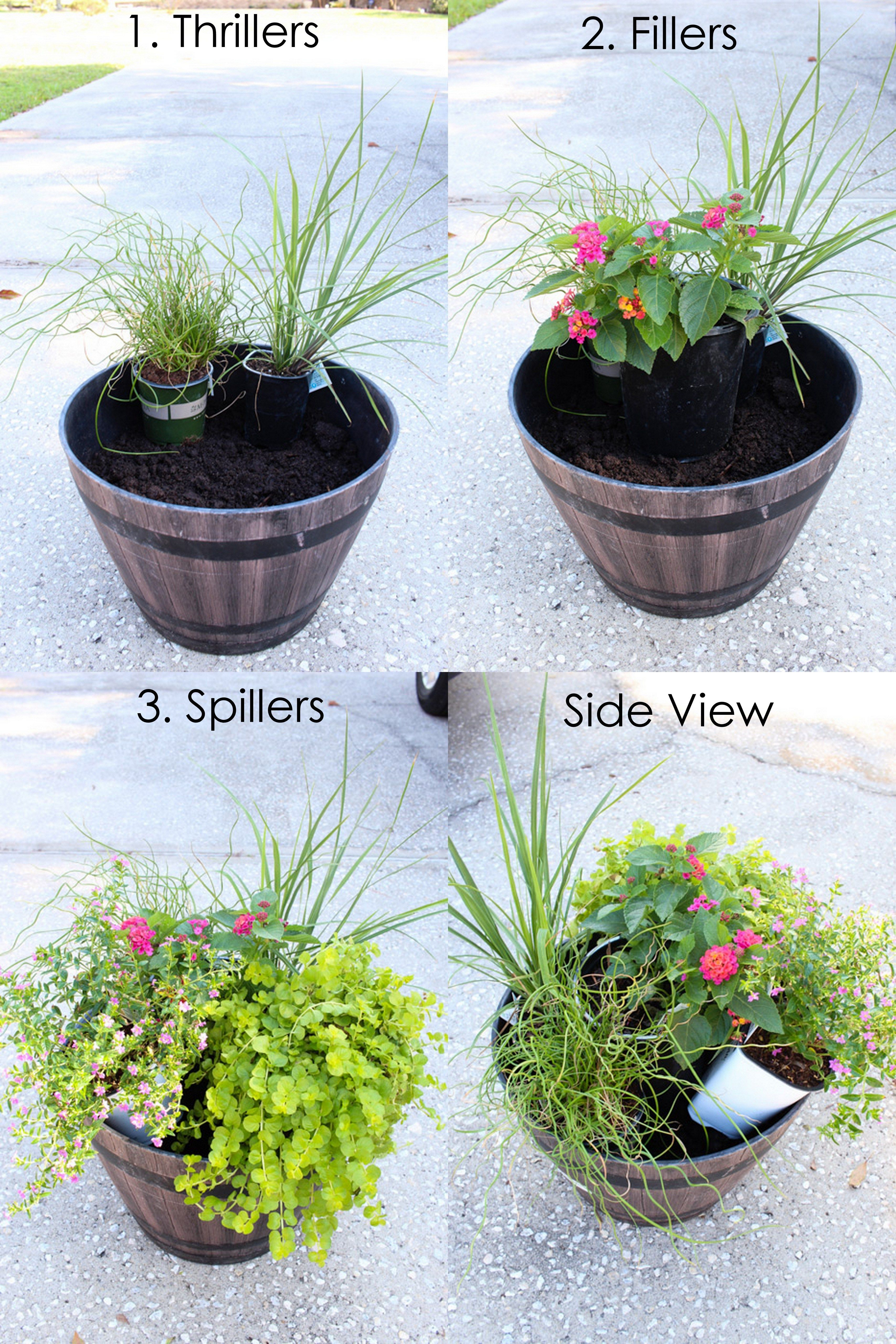 Plant Summer Flower Pots That Will Thrive With Images Potted