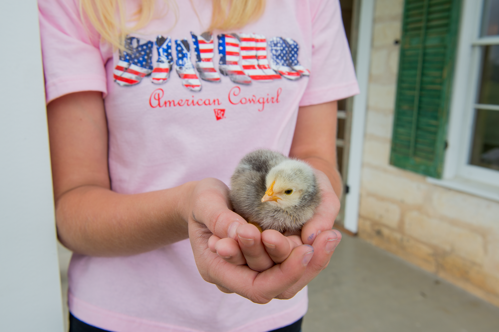 Buy Baby Chicks Ducklings And Turkey Poults Online With 0 Shipping 20 60 Breeds That Update Daily Raising Turkeys Buying Baby Chicks Urban Chickens