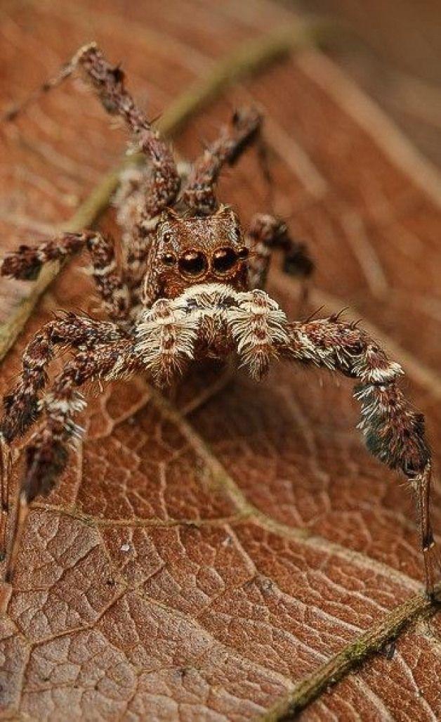 arthropods arthropods macro photography Pet spider