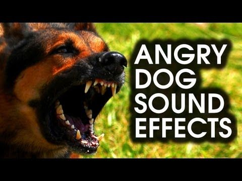 Angry Dog Bark Growl Sound Effects High Quality Dog Sounds Dangerous Dogs Dog Barking