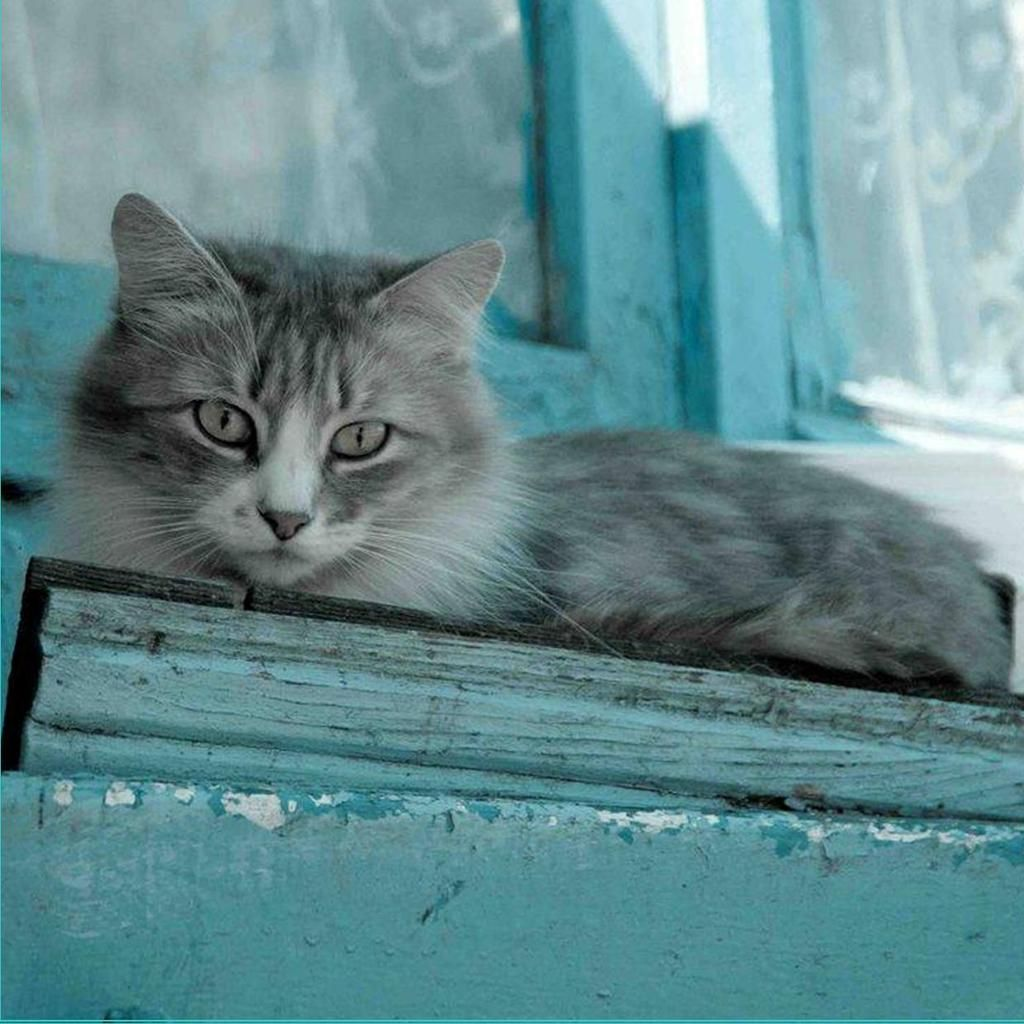Pin by JeRrY on CoUnTrY AqUa FaRm Baby cats, Pretty cats