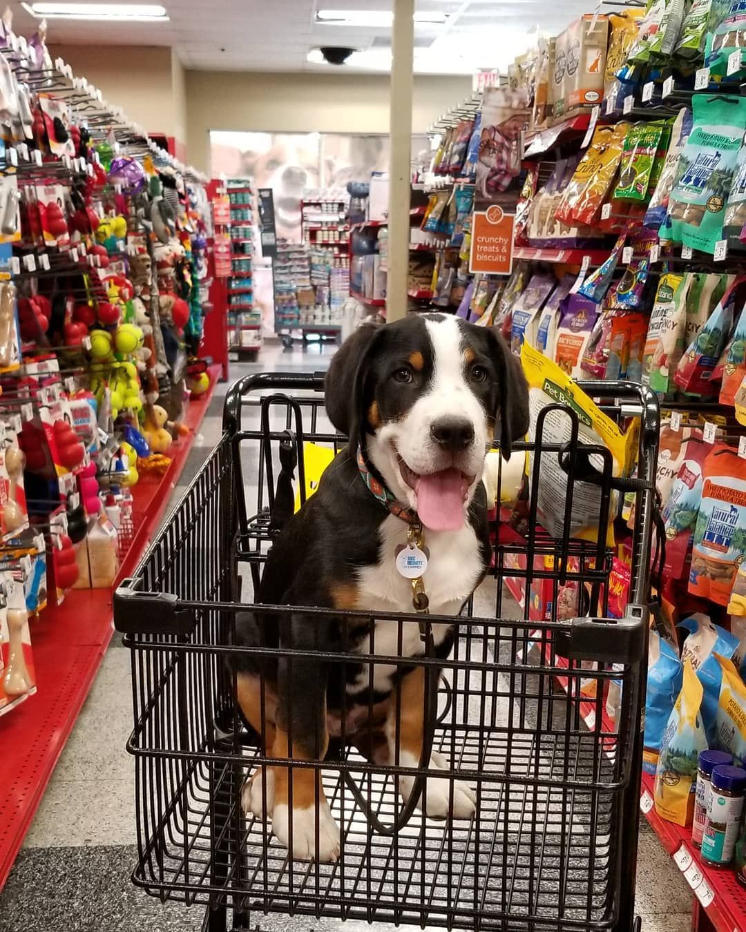 Om Took Me To Petco After The Vet Today For Some More Treats I