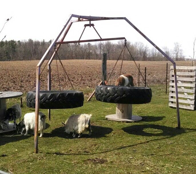 Tractor tire swing teeter totter our goats pinterest for Tyre swing ideas