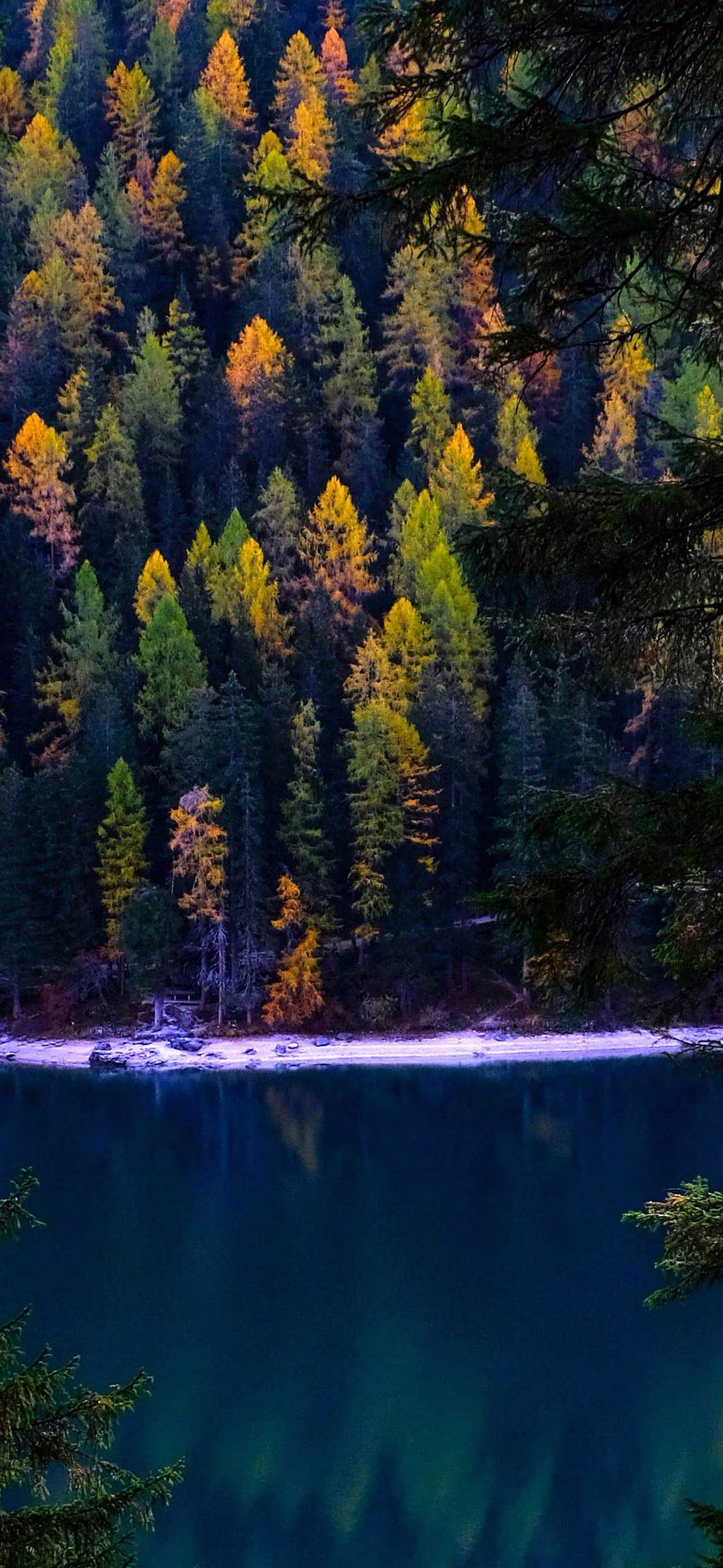Iphone X Wallpaper Forest autumn lake Hd in 2020 Autumn