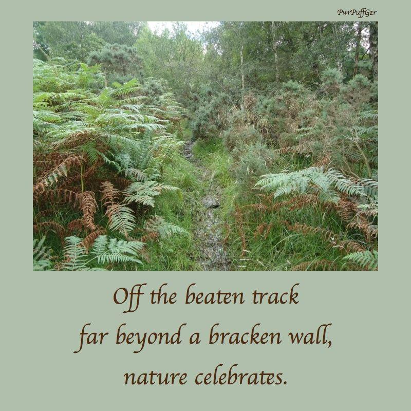 Haiku nature celebrates haiku Pinterest Poem and