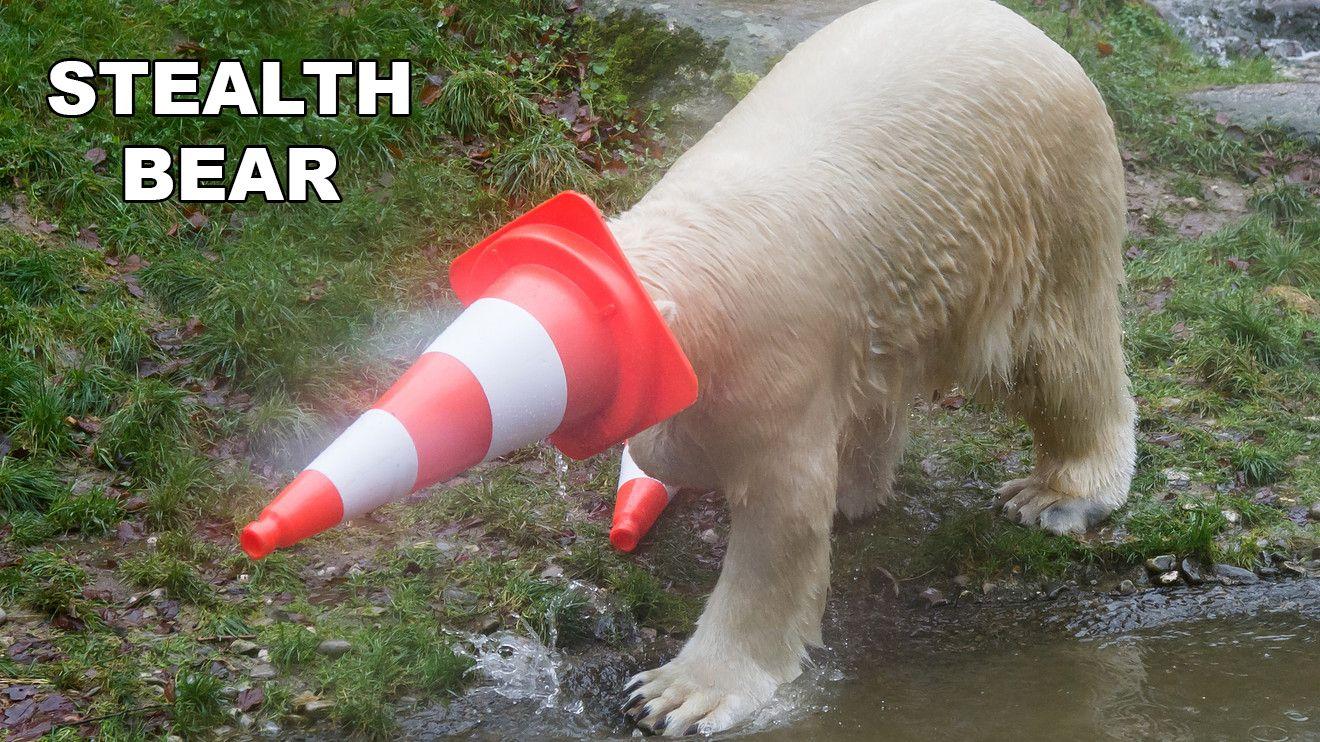 Monday Morning Randomness User Edition 28 Polar Bear Ice Bears Polar
