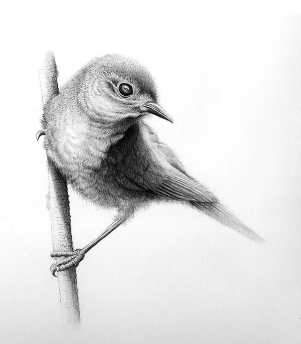 Bird Drawing By Conbatiente On Deviantart Dibujos De Pajaro Dibujo De Animales Pinturas De Animales