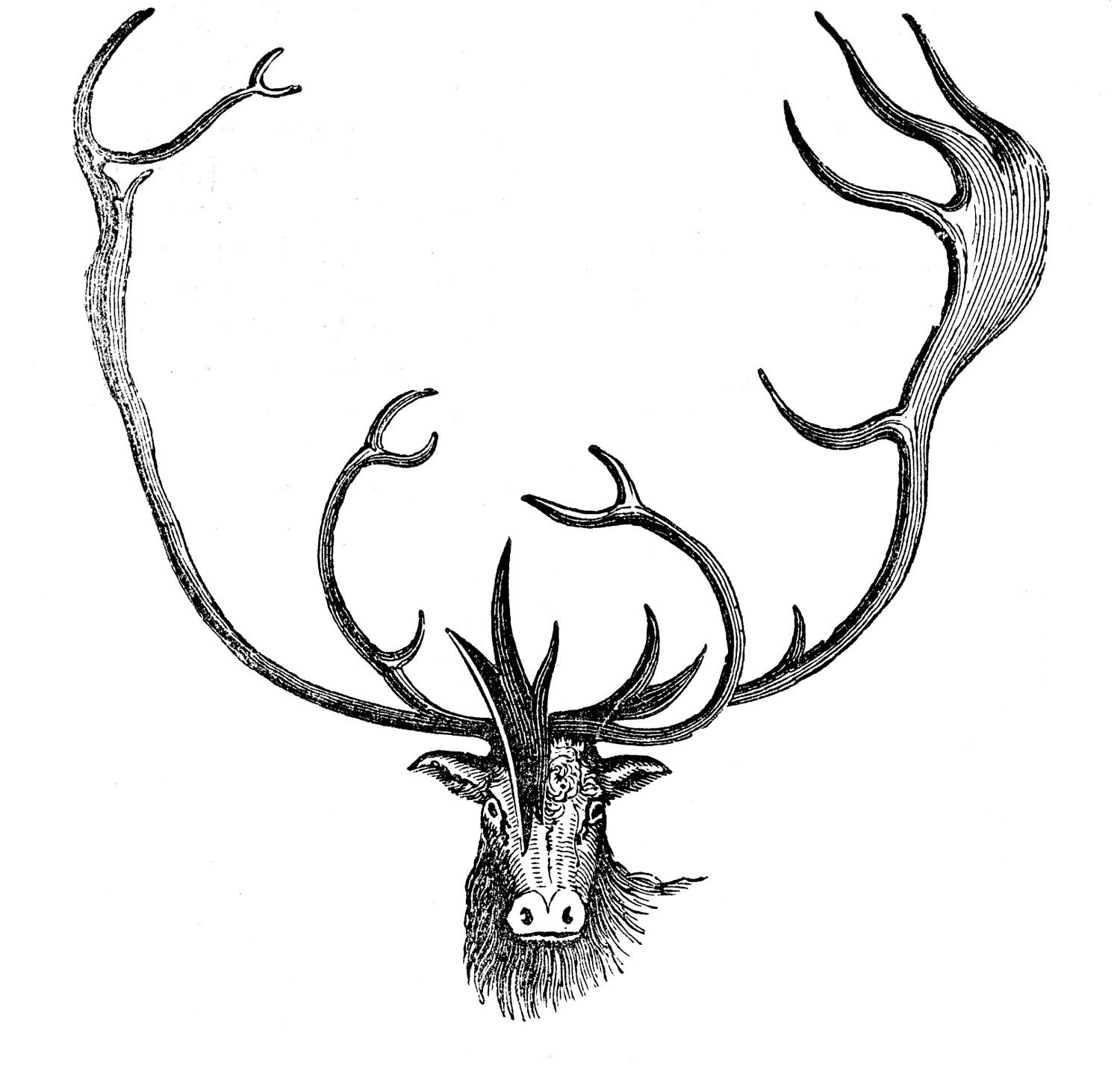The Graphics Fairy Vintage Images Diy Tutorials Craft Projects Clip Art Caribou Art