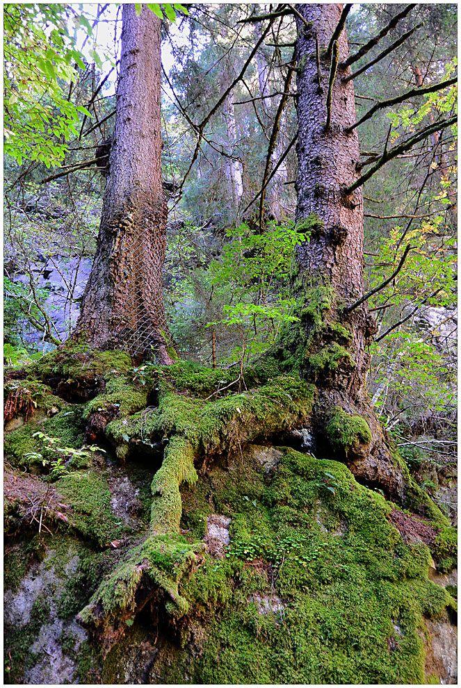 urwald 2 von urs guggisberg  pflanzen natur