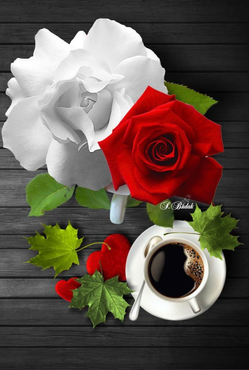 Pin by Edelmira Bermudez on LOVE for the RED N WHITE ROSES