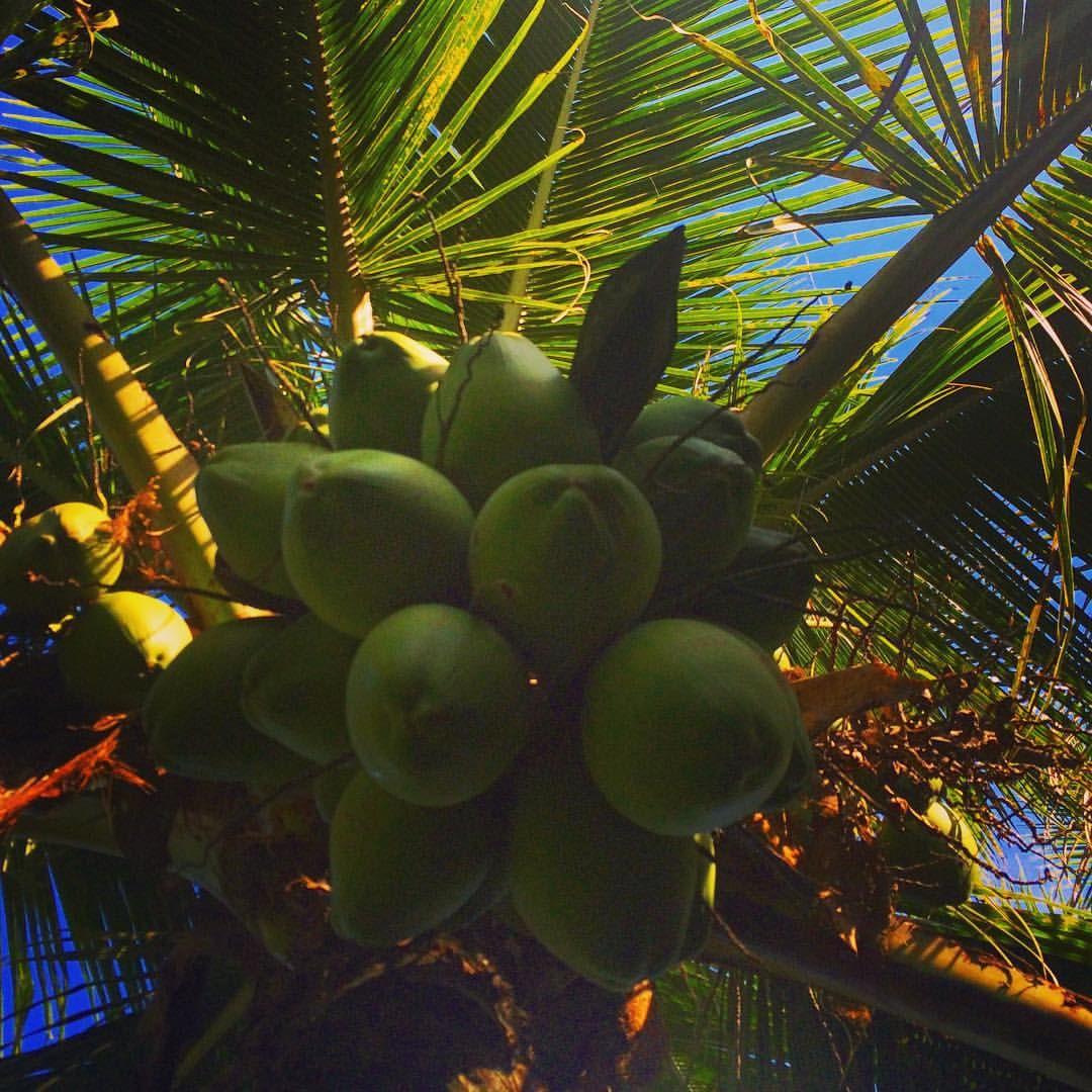 #coconut #bluesky #itamambuca #ubatuba #brasil #holydays #vacaciones #vacaciones2015 #terrinha
