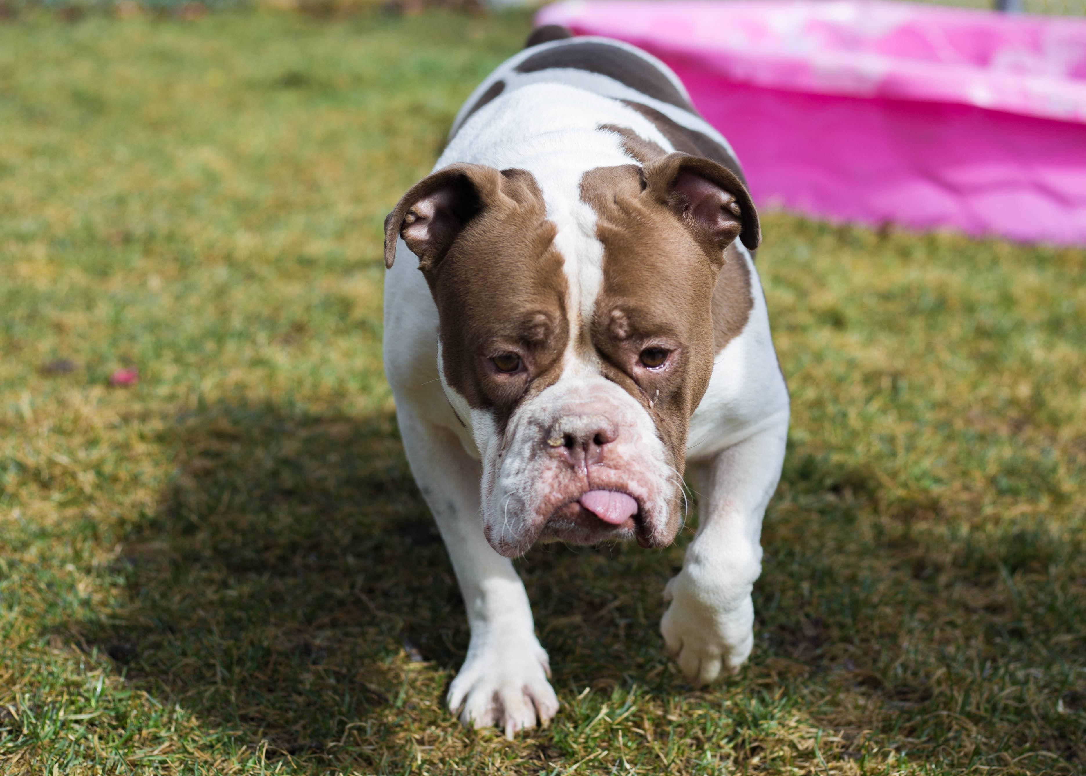 Adopt Mocha On Adoptable Pets Animal Rescue Pets Animals