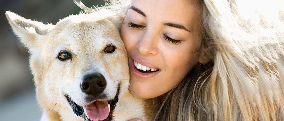 Dog Boarding Services Bangalore Pets Online Pet Store Dogs