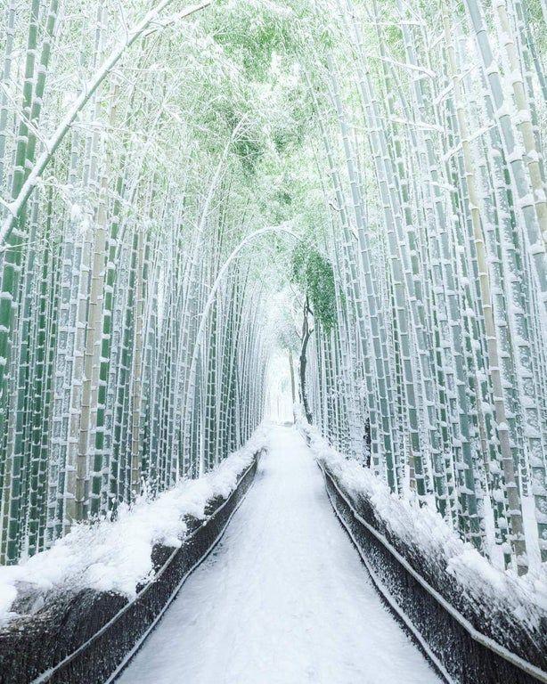 Kyoto's Arashiyama Bamboo forest in Japan : interestingasfuck