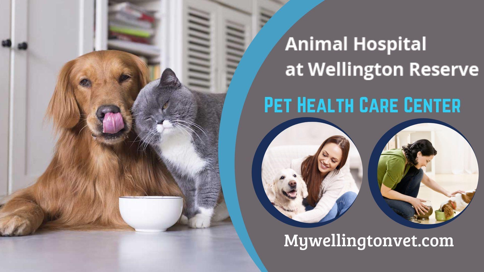 Pin On Animal Hospital