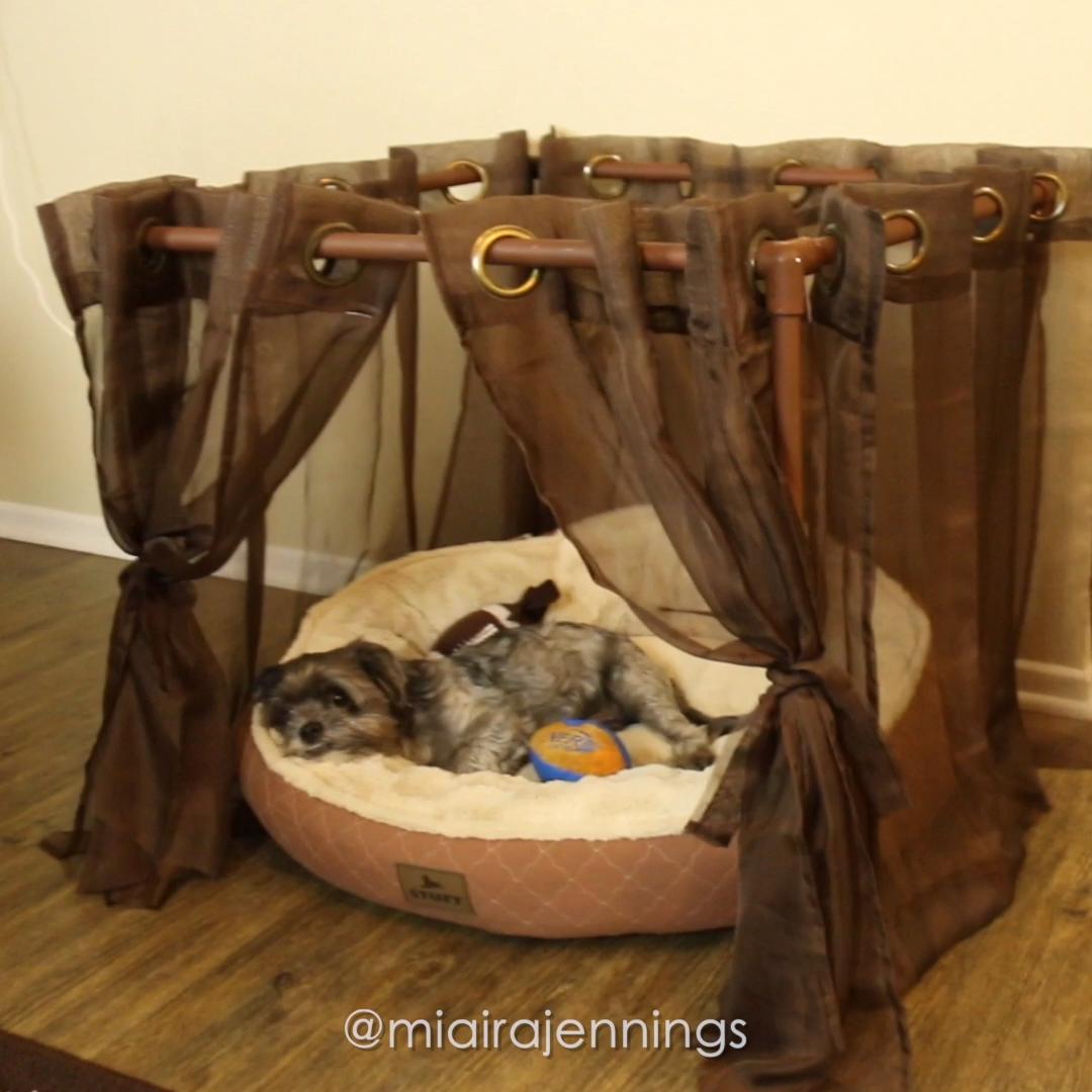 Photo of DIY PVC Pipe Dog Canopy