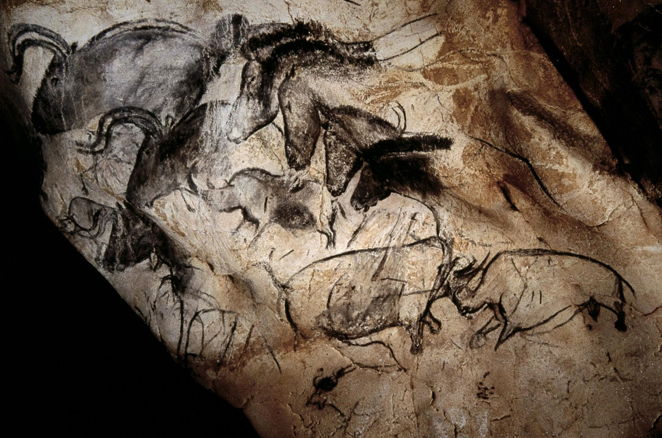 Unknown Aurochs Horses And Rhinoceroses Wall Painting In The Chauvet Cave Vallon Pont D Arc France Pigment Cave Paintings Chauvet Cave Prehistoric Art