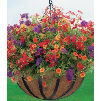 Sun/partial shade hanging basket - love this color combo ...